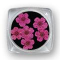 Ukrasno cveće za nokte IF01-04