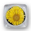 Ukrasno cveće za nokte IF09-02