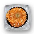 Ukrasno cveće za nokte IF09-03