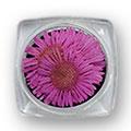 Ukrasno cveće za nokte IF09-04