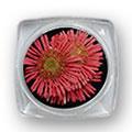 Ukrasno cveće za nokte IF09-05
