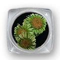 Ukrasno cveće za nokte IF09-06
